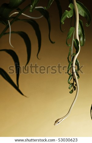 green tree snake crawling down tropical rain forest vegetation yellow background with gradient and copy space - stock photo