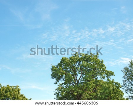 Green tree tops on blue sky background in summer day.