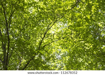 green tree with leaves - stock photo