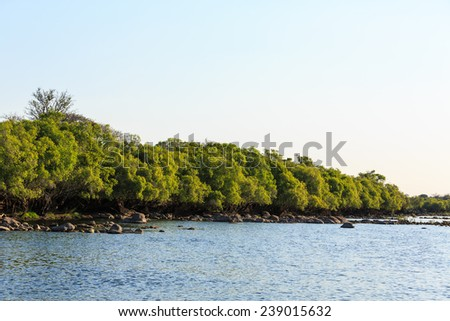 Green trees along the riverside in summer time - stock photo