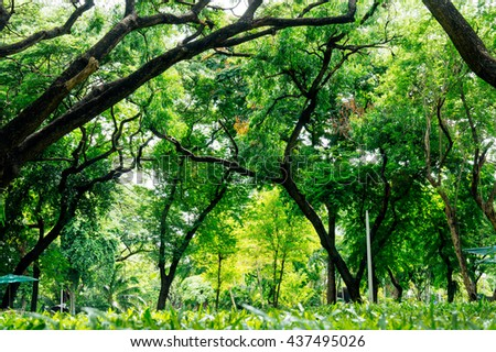 Green trees and beautiful park natural fresh ozone.
