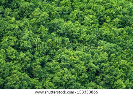 Green trees background - stock photo