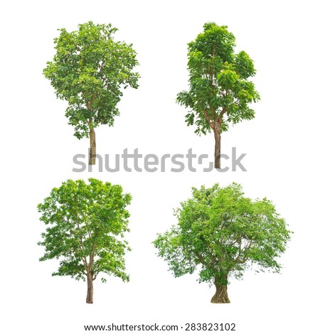 Green trees collection isolated on white background - stock photo