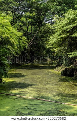 Green trees covered small canal filled with duckweeds in the public park.