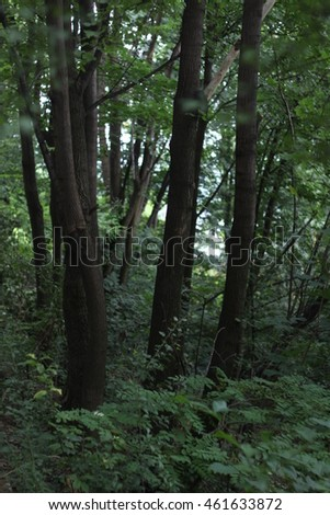 Green trees detailed with leaves and trunks in a forest