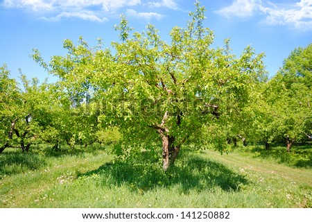 green trees in the garden on a background of blue sky