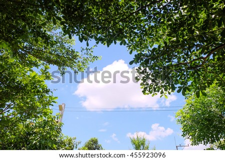 Green Trees in the Garden with blue sky.