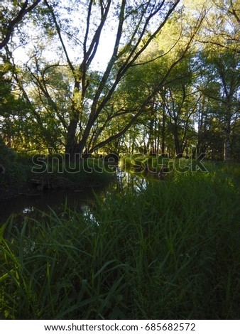 green trees in the wood reclected in a calm river