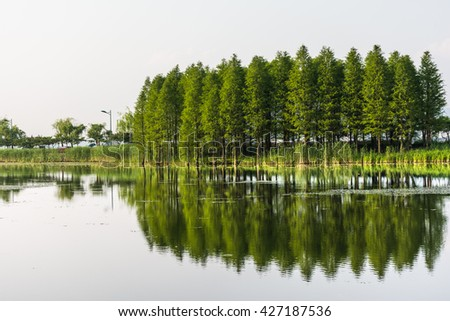 Green trees is reflected in the water. Trees are reflected in the calm water on the background of the sky and the horizon - stock photo