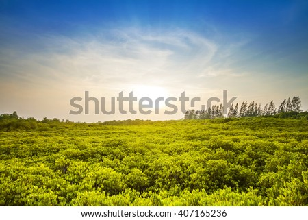 Green trees, mangroves,Tung Prong Thong,Golden Mangrove Field,Pra Sae, Rayong, Thailand