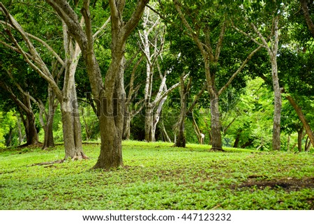green trees nature background