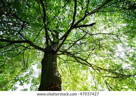Green treetop - stock photo