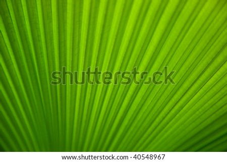 Green tropical leaf closeup. Texture or background.