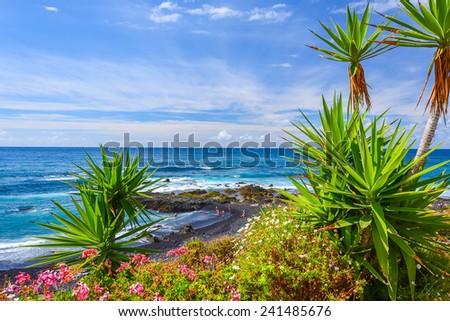 Green tropical plants on beach in Puerto de la Cruz, Tenerife, Canary Islands, Spain - stock photo