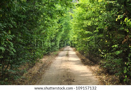 green tunel forest road
