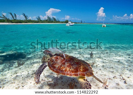 Green turtle in Caribbean Sea scenery of Mexico - stock photo