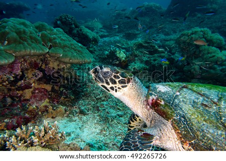 green turtle swimming on the blue ocean background