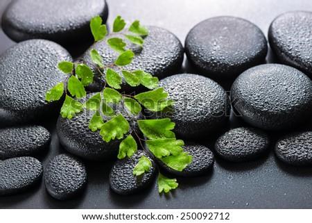 green twig Adiantum fern on zen basalt stones with dew, beautiful spa concept - stock photo