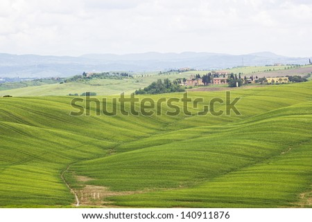 Green typical tuscan landscape in spring time - stock photo