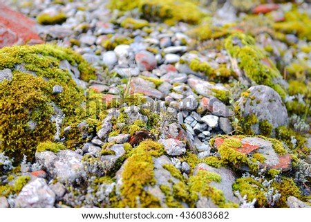 Green valley,moss and stones in Franz Josef Glacier, New Zealand South Island - stock photo