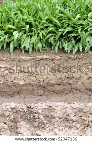 Green vegetable and soil background