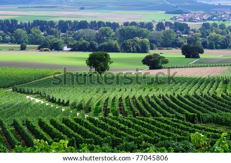 Green vineyards. Germany