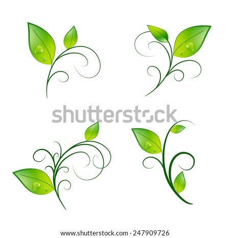Green Vitality Leaf Floral Decoration Eco Set - stock photo