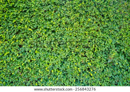 green wall Background of a Garden - stock photo
