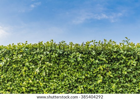 green wall. Tall hedge, endless seamless pattern, tall hedge with sky and grass. - stock photo
