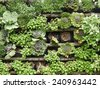 green wall with flora combination - stock photo