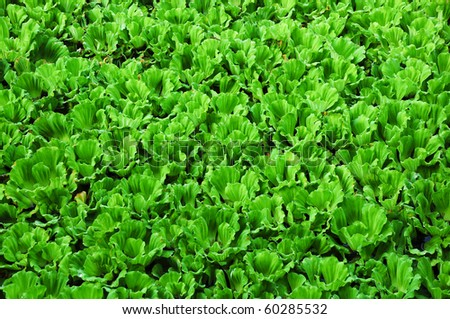 Green water weeds pattern. - stock photo