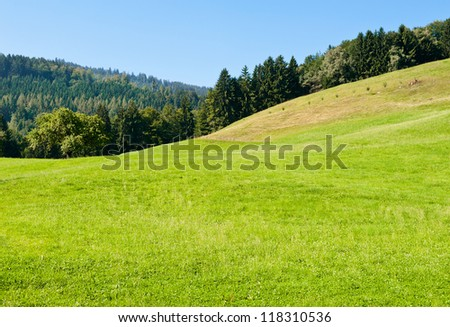 Green waves of grass and forest - stock photo