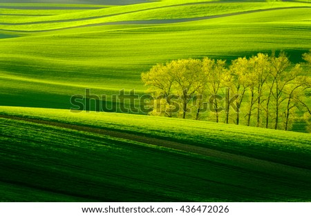 Green wavy hills in South Moravia, Csezh Republic - stock photo