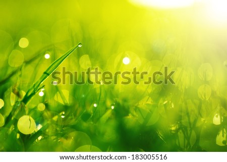 Green wet grass with dew on a blades. Shallow depth of field - stock photo