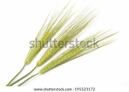 Green Wheat bouquet border, isolated on white background