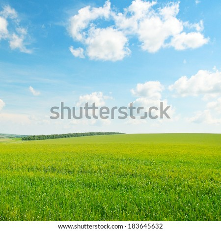 green wheat field and blue cloudy sky