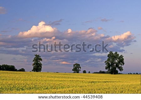 Green Wheat Field of Farmland with Clouds