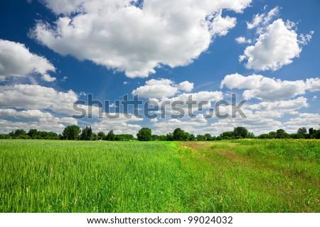 Green wheat field on blue sky background - stock photo