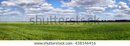 Green wheat on blue sky background - stock photo