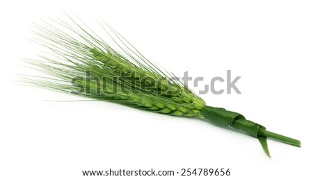 Green wheat over white background