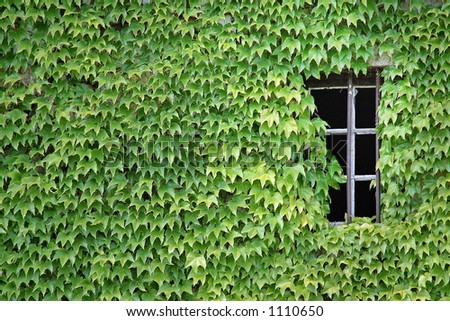 Green window - stock photo