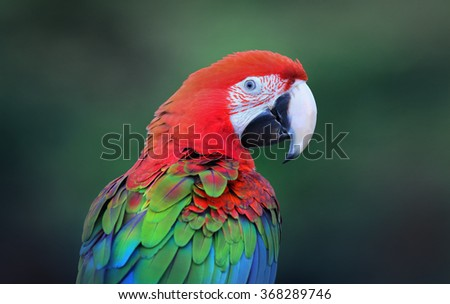 green-winged macaw,colourful bird