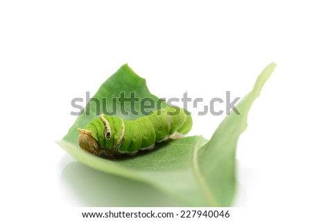Green worm. - stock photo