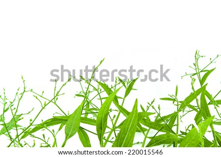 Green yard on white background
