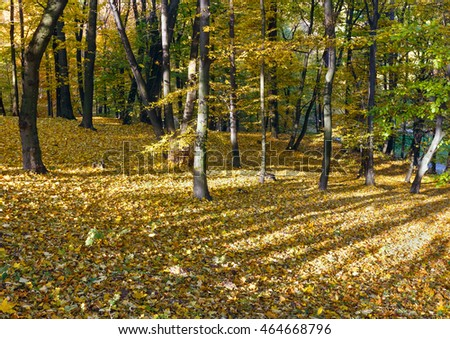 Green-yellow carpet of autumn leaves with shadow of trees in city park.