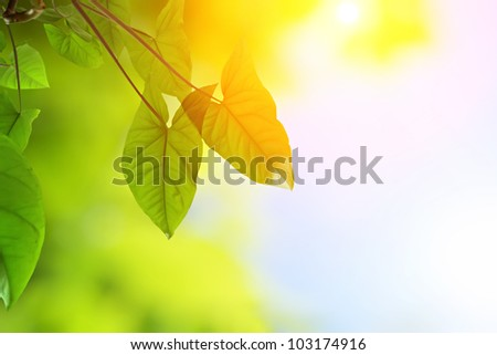 green young leaves in warm sunlight - stock photo