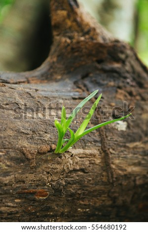 Green young little tree emerge from wood stump - Concept of hope and rebirth. Fresh nature small.