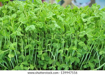 green young pea - stock photo