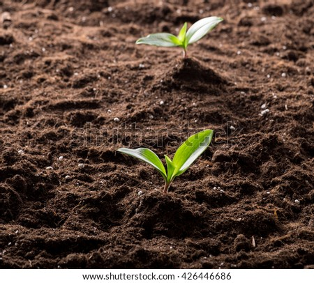 Green young sprouts growing in good brown soil. New life concept - stock photo