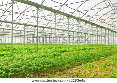 Greenery or glasshouse with salad and vegetables - stock photo